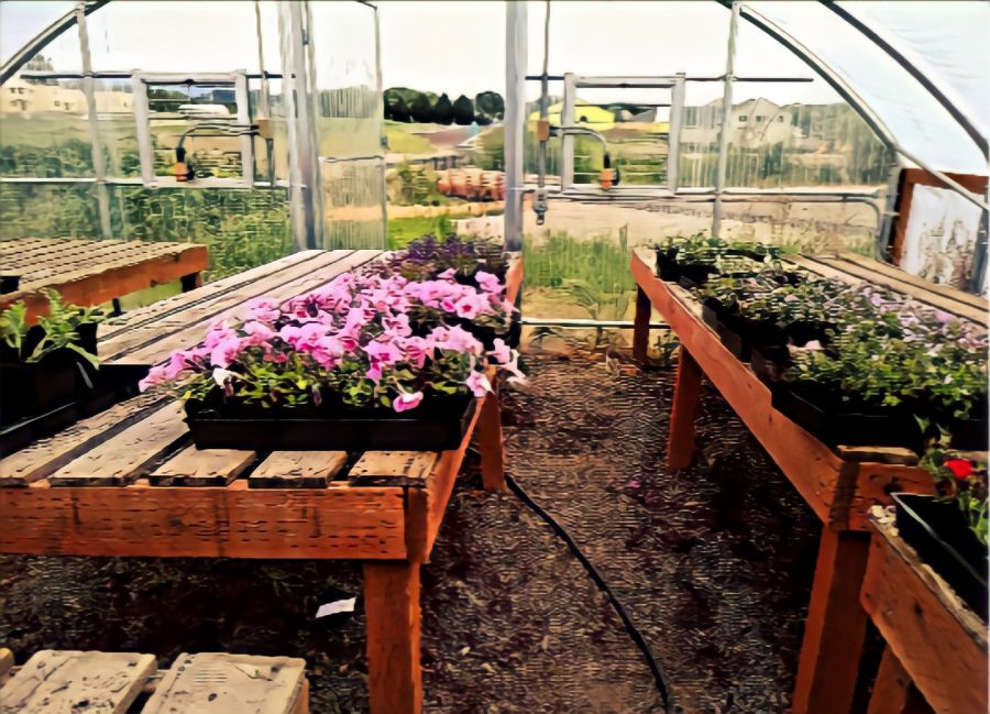 The plant sale is a fundraiser for the AG program.